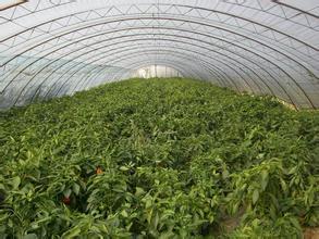 绿色食品生产与检验